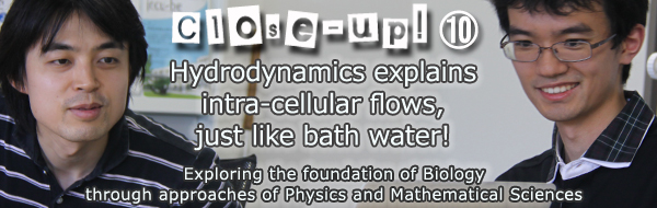Hydrodynamics explains intra-cellular flows, just like bath water!