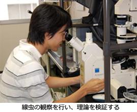 線虫の観察を行い、理論を検証する