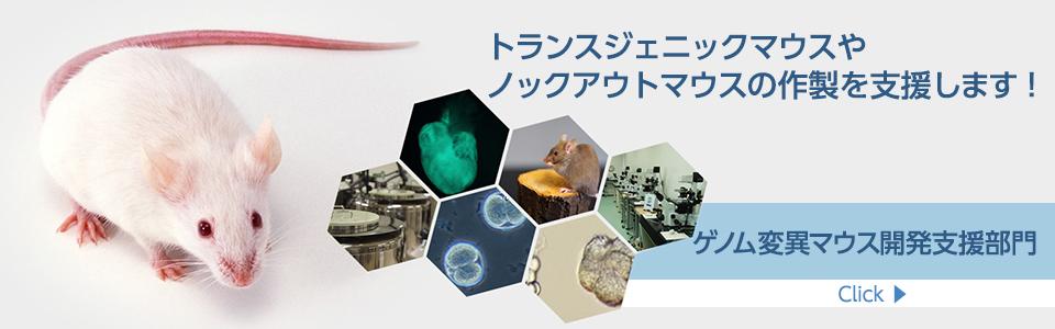 ゲノム変異マウス開発支援部門