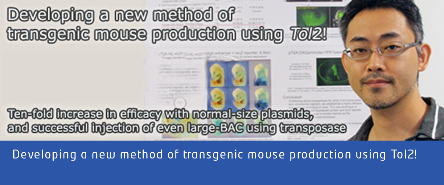 Developing a new method of transgenic mouse production using Tol2!