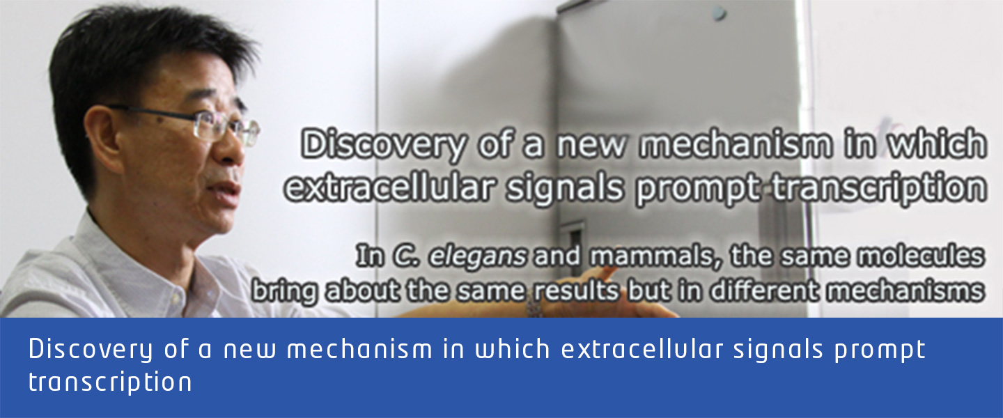 Discovery of a new mechanism in which extracellular signals prompt transcriptione